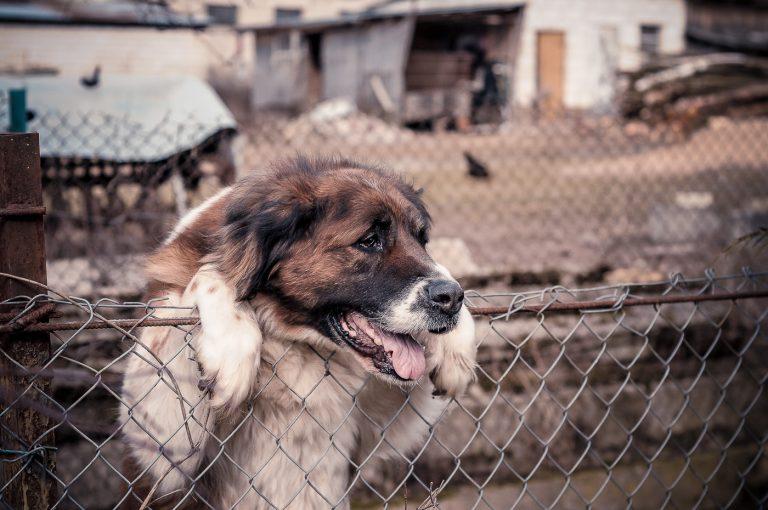 Lekarz weterynarii Mokotów, Sadyba – problemy z żołądkiem u psa