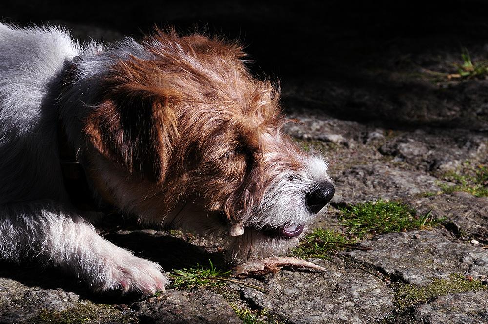 Lecznica weterynaryjna - glista psia, glista kocia, psi tasiemiec, tasiemiec bąblowcowy, lamblia, toksoplazma, pchła kocia i psia, kleszcz, porady, leczenie