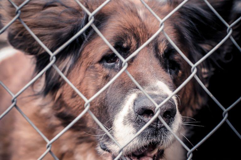 Weterynarz Warszawa – porady dla właścicieli zwierząt