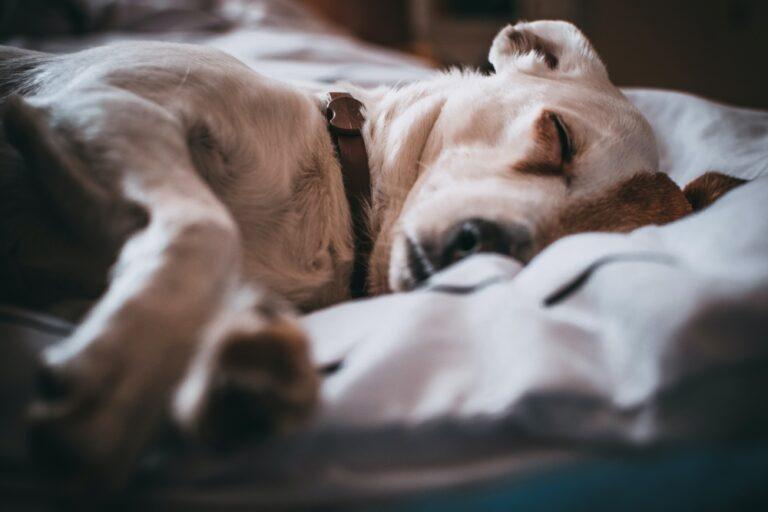 Nefrologia i urologia psów i kotów