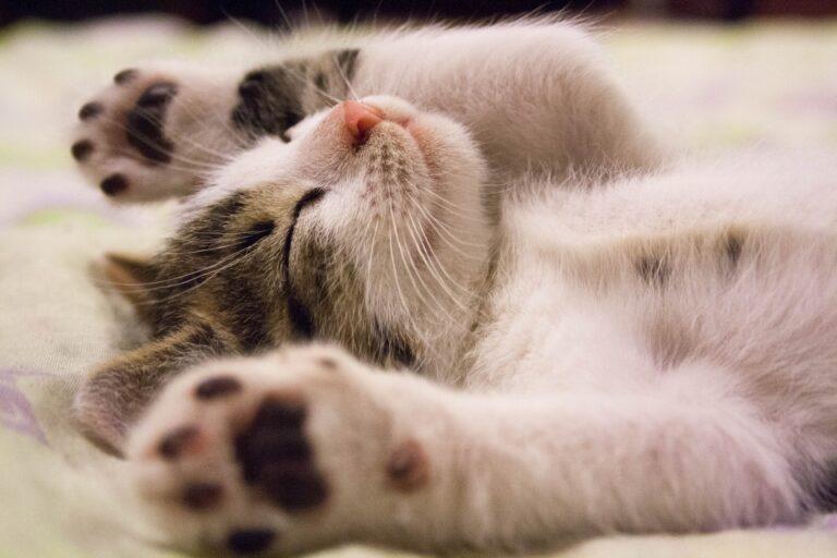 Dlaczego koty chorują na nerki?