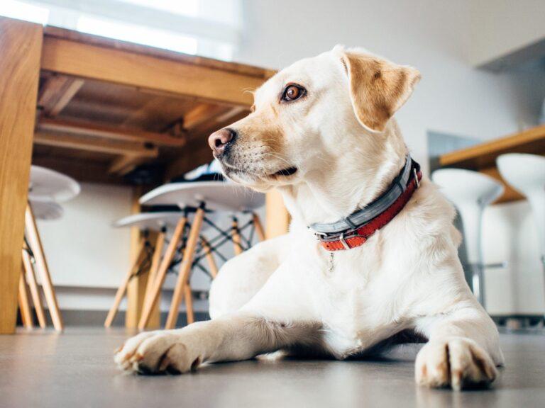 Psia mowa ciała – porady behawioralne